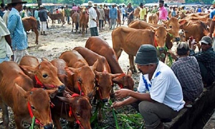 Suasana di Pasar Sapi Keppo, Larangan, Pamekasan, Madura, Jawa Timur. (Sumber foto: Tempo.co)
