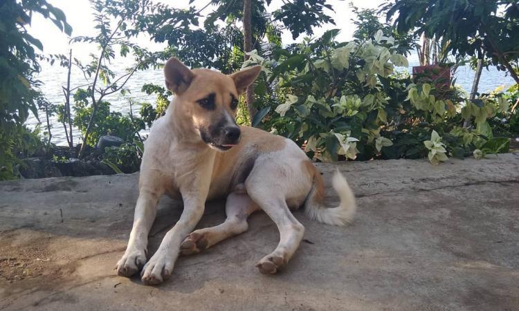 Cerita Tentang Anjing Saya Redaksi Indonesia Jernih Tajam Mencerahkan