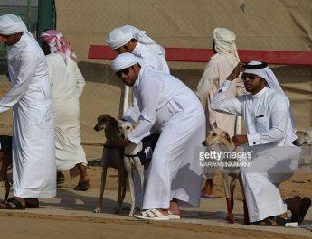 anjing arab