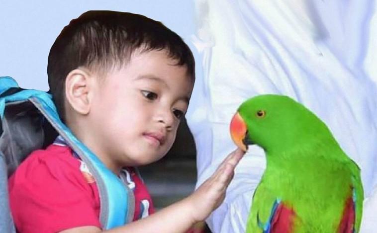 jan ethes dan burung
